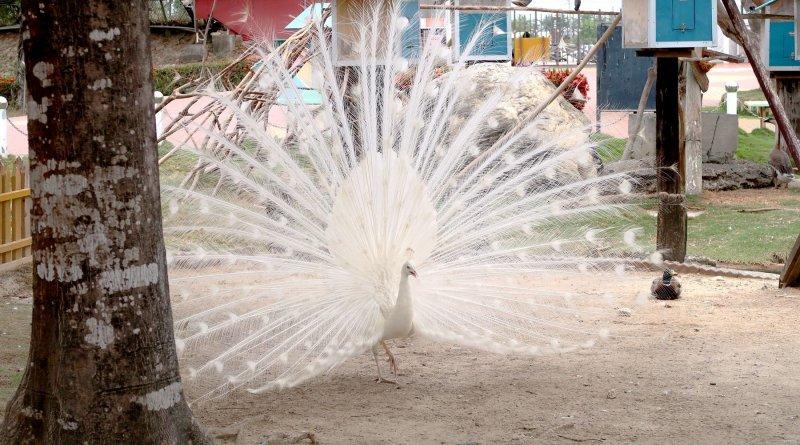 台南旅遊 – 頑皮世界。2021.07水樂園即將開幕,不只是動物園還有遊樂園,來一趟南臺灣的寓教於樂之旅